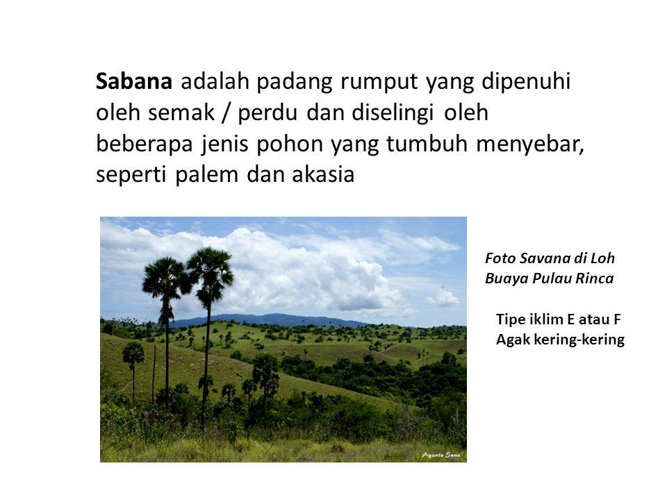 Sabana adalah padang rumput yang dipenuhi oleh semak / perdu dan diselingi oleh beberapa jenis pohon yang tumbuh menyebar, seperti palem dan akasia Foto Savana di Loh Buaya Pulau Rinca Tipe iklim E atau F Agak kering-kering