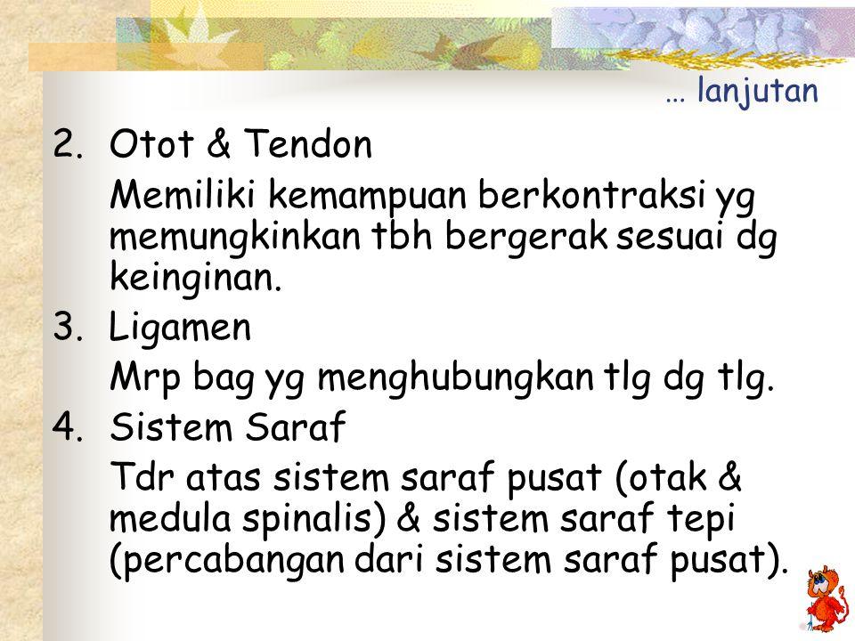 … lanjutan 2.Otot & Tendon Memiliki kemampuan berkontraksi yg memungkinkan tbh bergerak sesuai dg keinginan.