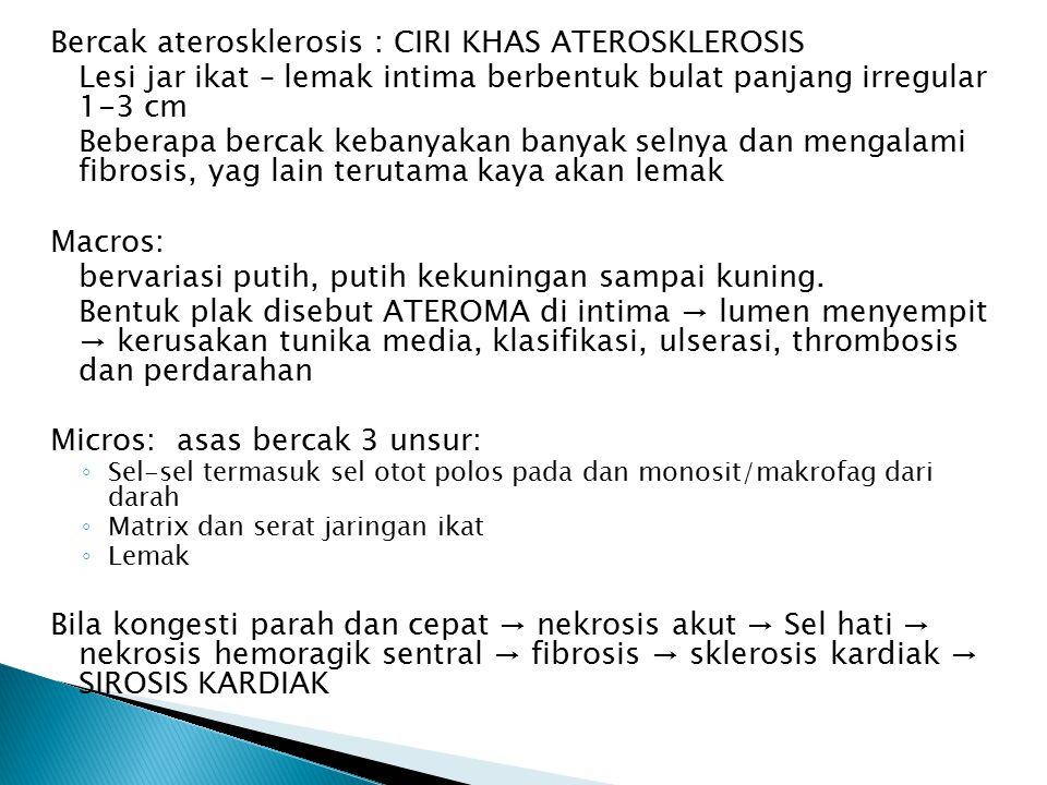 Bercak aterosklerosis : CIRI KHAS ATEROSKLEROSIS Lesi jar ikat – lemak intima berbentuk bulat panjang irregular 1-3 cm Beberapa bercak kebanyakan banyak selnya dan mengalami fibrosis, yag lain terutama kaya akan lemak Macros: bervariasi putih, putih kekuningan sampai kuning.
