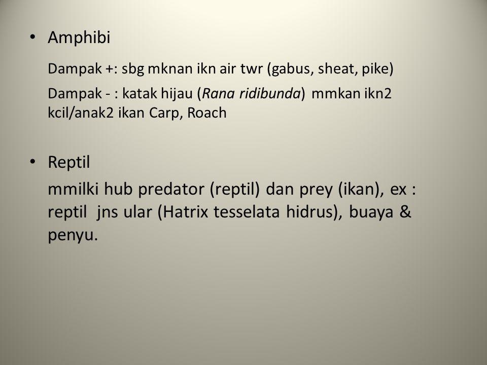 Amphibi Dampak +: sbg mknan ikn air twr (gabus, sheat, pike) Dampak - : katak hijau (Rana ridibunda) mmkan ikn2 kcil/anak2 ikan Carp, Roach Reptil mmilki hub predator (reptil) dan prey (ikan), ex : reptil jns ular (Hatrix tesselata hidrus), buaya & penyu.