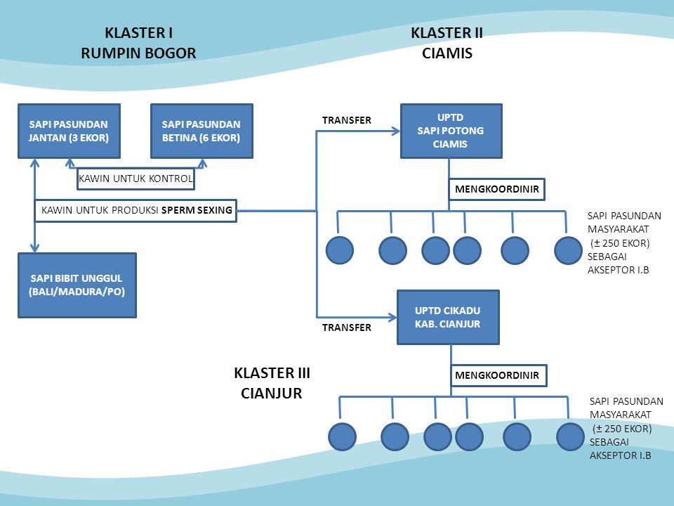 SAPI PASUNDAN JANTAN (3 EKOR) SAPI PASUNDAN BETINA (6 EKOR) SAPI BIBIT UNGGUL (BALI/MADURA/PO) KAWIN UNTUK KONTROL KAWIN UNTUK PRODUKSI SPERM SEXING UPTD SAPI POTONG CIAMIS UPTD CIKADU KAB.