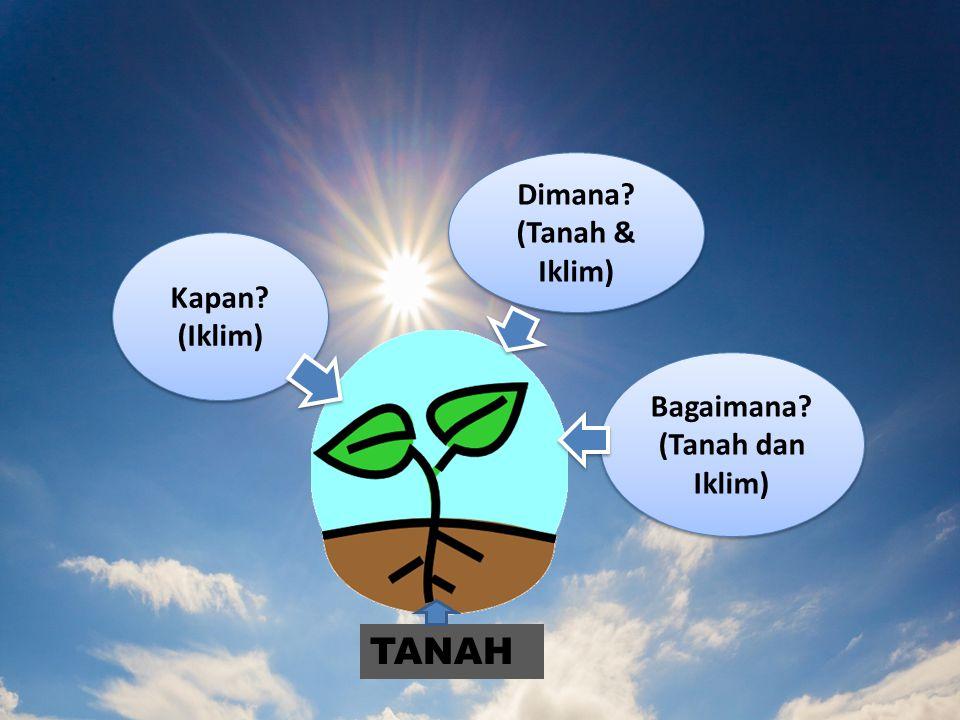 Bagaimana? (Tanah dan Iklim) Bagaimana? (Tanah dan Iklim) Dimana? (Tanah & Iklim) Dimana? (Tanah & Iklim) Kapan? (Iklim) Kapan? (Iklim) TANAH