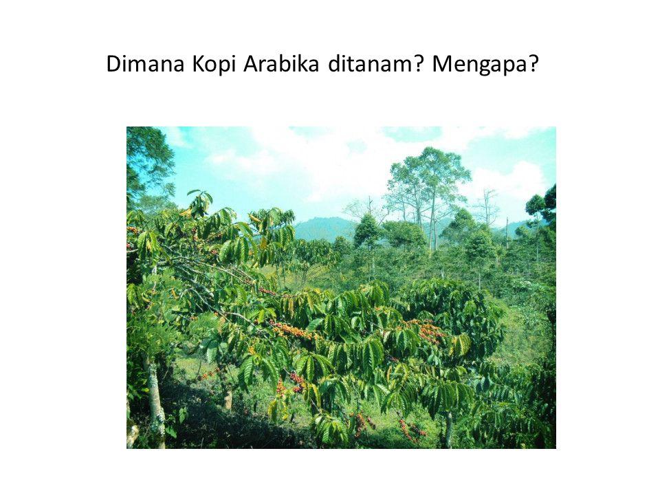 Dimana Kopi Arabika ditanam? Mengapa?