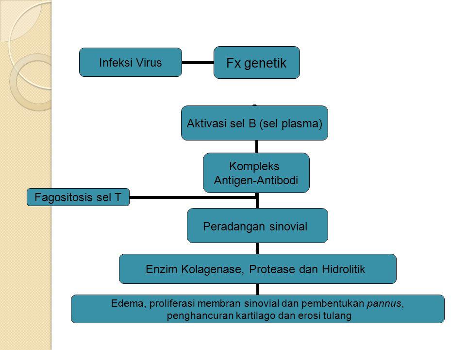 Fx genetik Infeksi Virus Kompleks Antigen-Antibodi Aktivasi sel B (sel plasma)Peradangan sinovial Enzim Kolagenase, Protease dan Hidrolitik Edema, pro