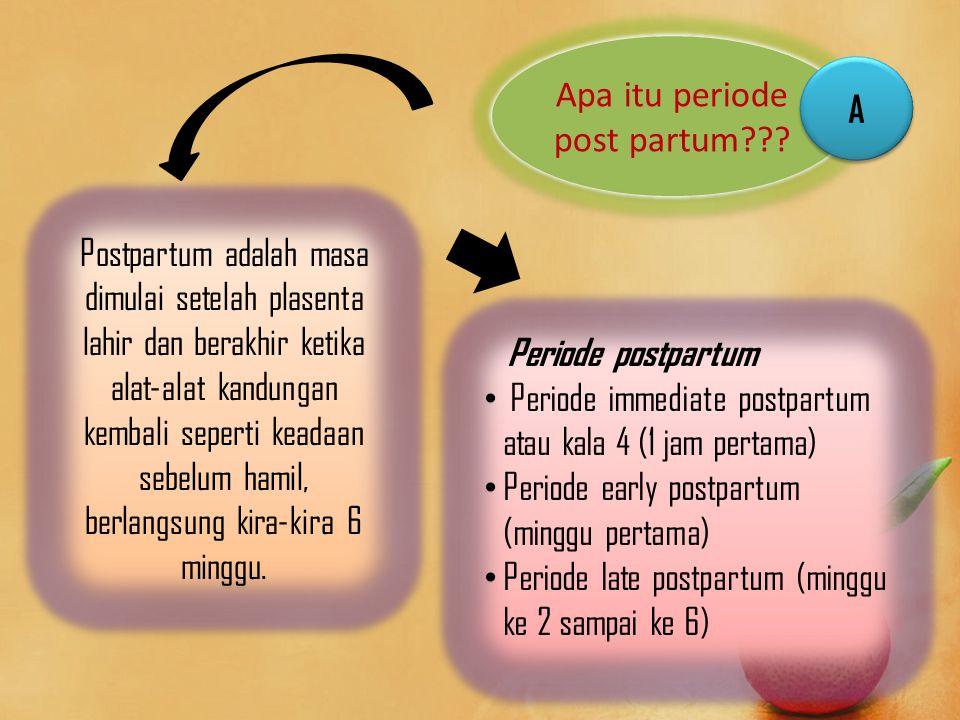 Fisiologi Pada Periode Post Partum 1.Perubahan Fisik a.