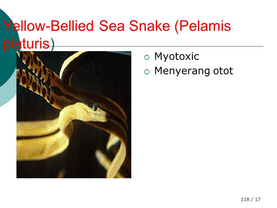 117 / 17  Bite from a Western Diamondback Rattlesnake (Crotalus atrox)  A Western Diamondback Rattlesnake, haemotoxic