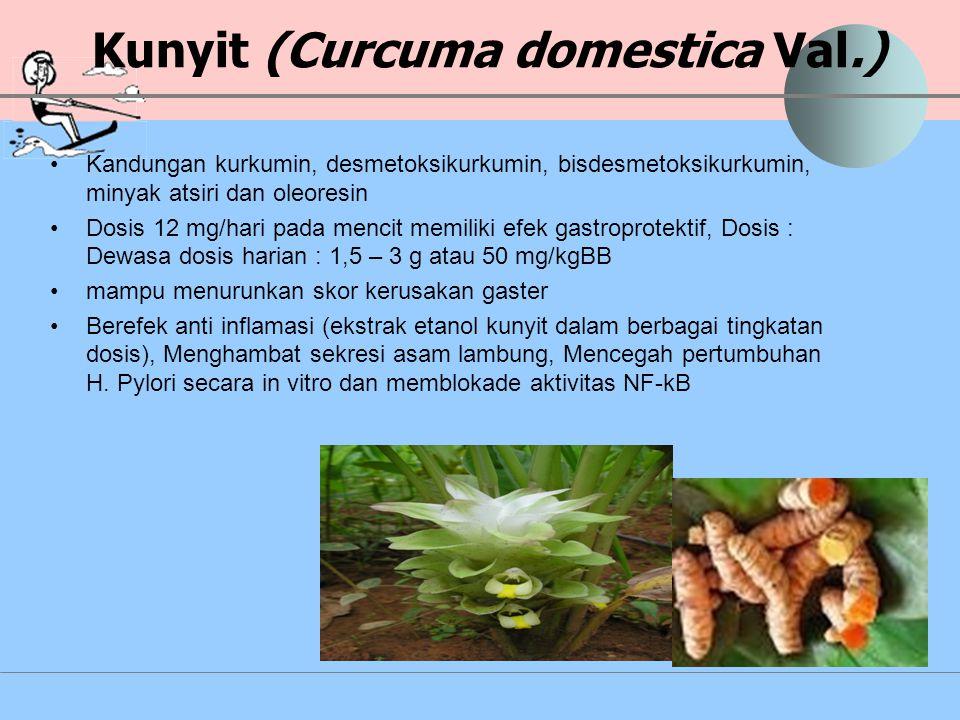 Kunyit (Curcuma domestica Val.) Kandungan kurkumin, desmetoksikurkumin, bisdesmetoksikurkumin, minyak atsiri dan oleoresin Dosis 12 mg/hari pada menci