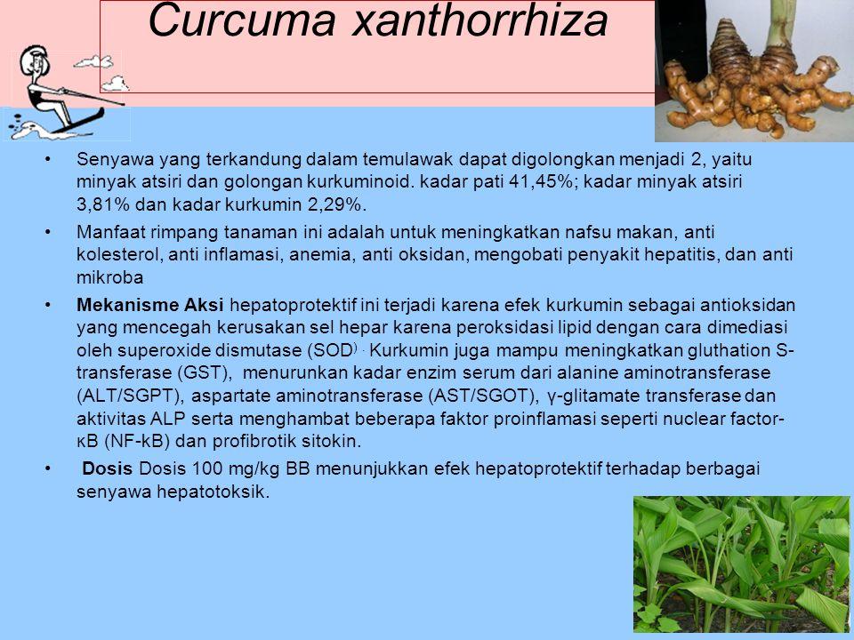 Curcuma xanthorrhiza Senyawa yang terkandung dalam temulawak dapat digolongkan menjadi 2, yaitu minyak atsiri dan golongan kurkuminoid. kadar pati 41,