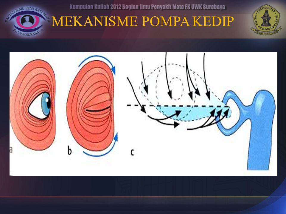 1.Entropion 2. Ektropion 3. Dermatokalasis/Blefarokalasis 4.