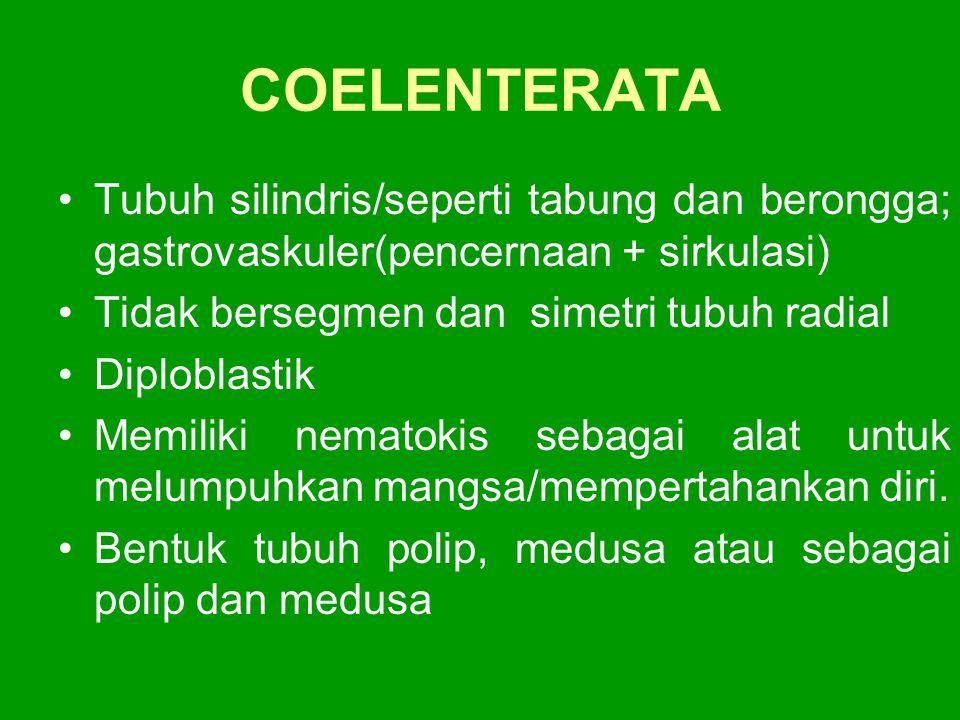 COELENTERATA Tubuh silindris/seperti tabung dan berongga; gastrovaskuler(pencernaan + sirkulasi) Tidak bersegmen dan simetri tubuh radial Diploblastik