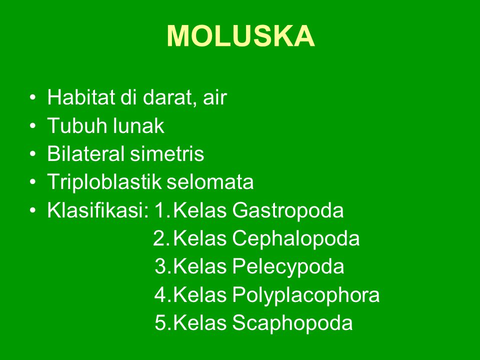 MOLUSKA Habitat di darat, air Tubuh lunak Bilateral simetris Triploblastik selomata Klasifikasi: 1.Kelas Gastropoda 2.Kelas Cephalopoda 3.Kelas Pelecy