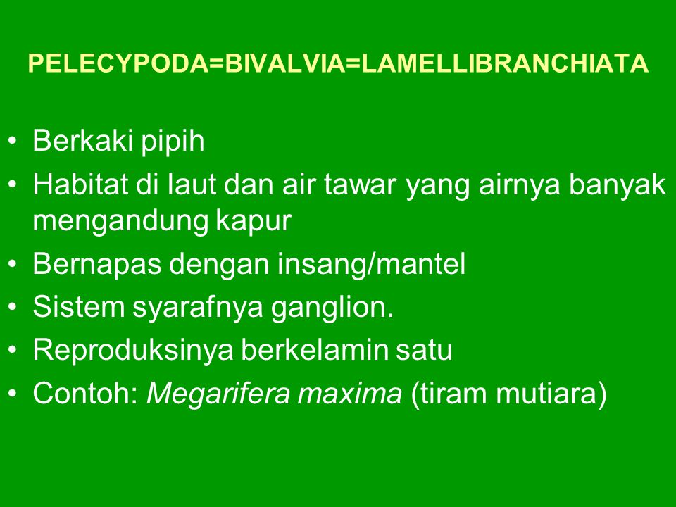 PELECYPODA=BIVALVIA=LAMELLIBRANCHIATA Berkaki pipih Habitat di laut dan air tawar yang airnya banyak mengandung kapur Bernapas dengan insang/mantel Si