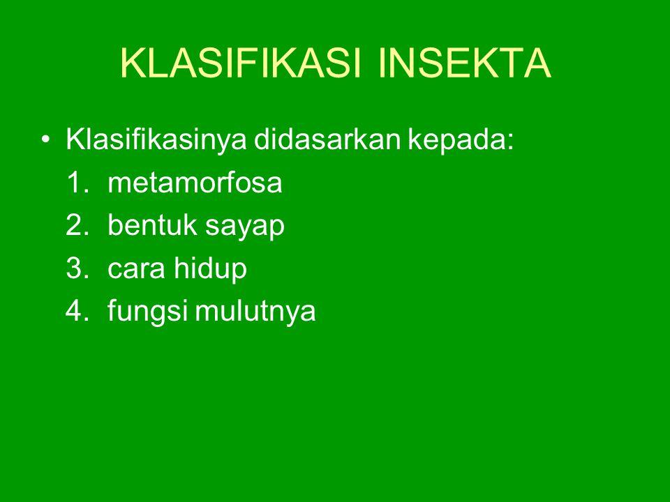 KLASIFIKASI INSEKTA Klasifikasinya didasarkan kepada: 1.metamorfosa 2.bentuk sayap 3.cara hidup 4.fungsi mulutnya