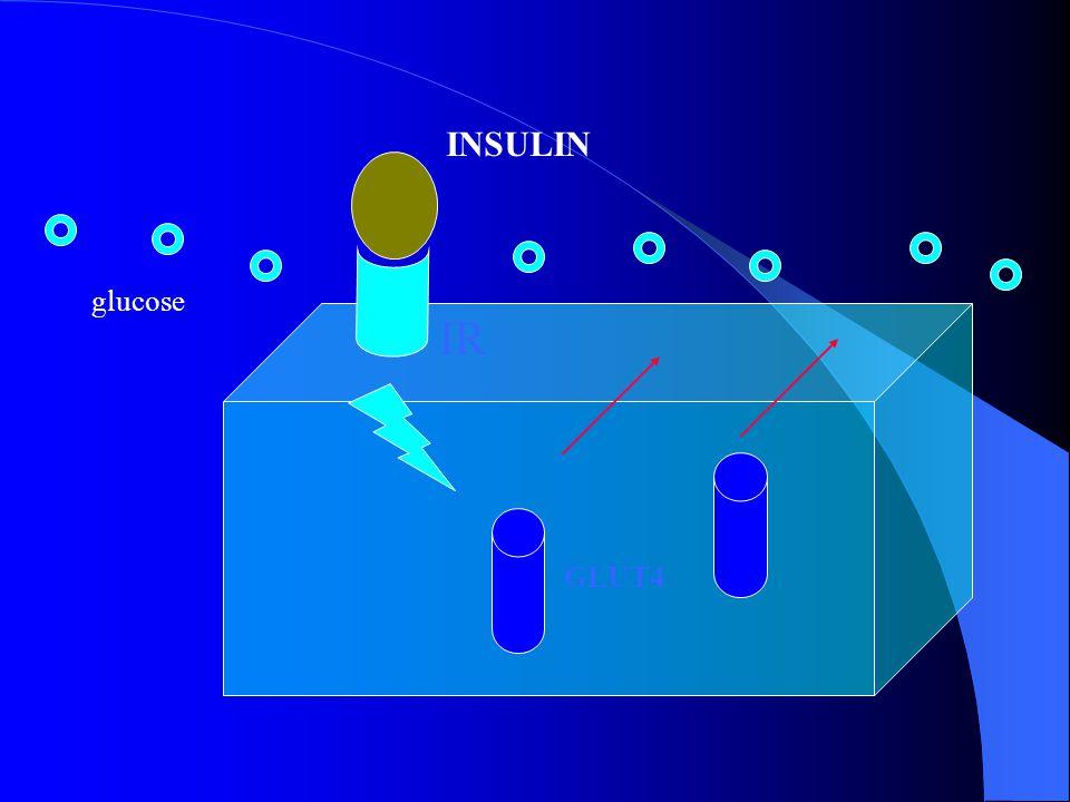 GLUT4 IR INSULIN glucose