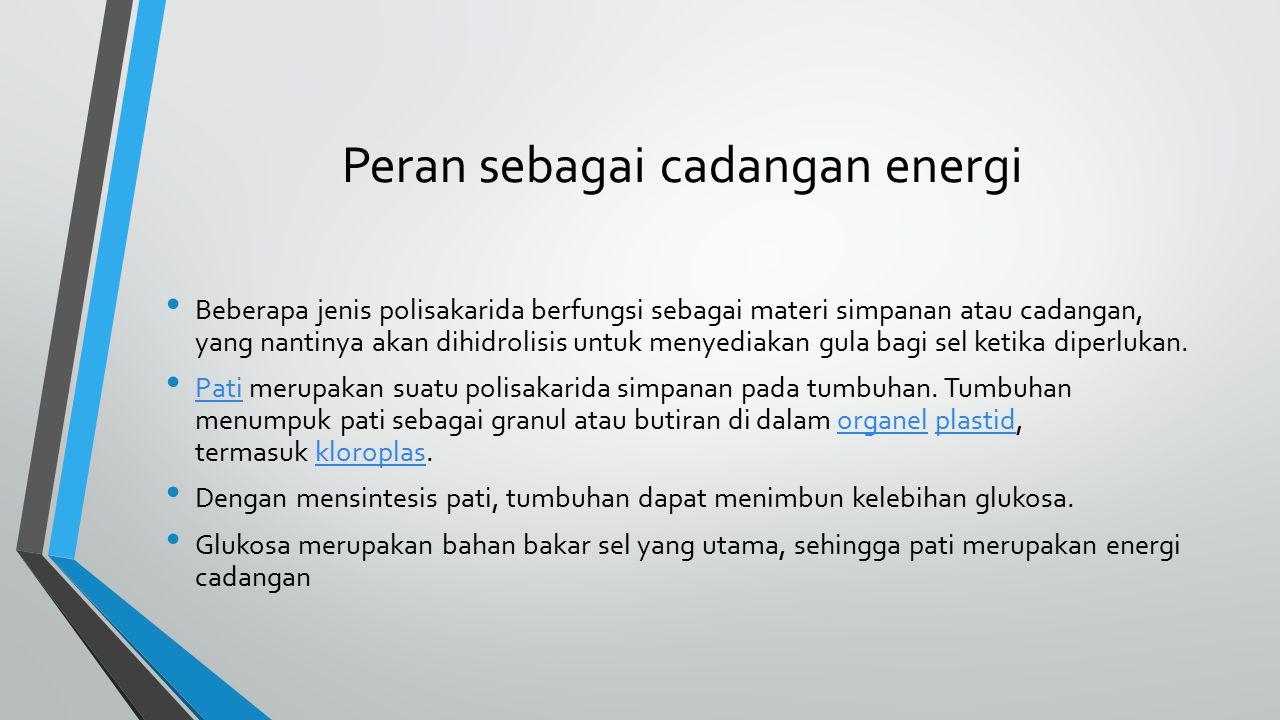 Peran sebagai cadangan energi Beberapa jenis polisakarida berfungsi sebagai materi simpanan atau cadangan, yang nantinya akan dihidrolisis untuk menye