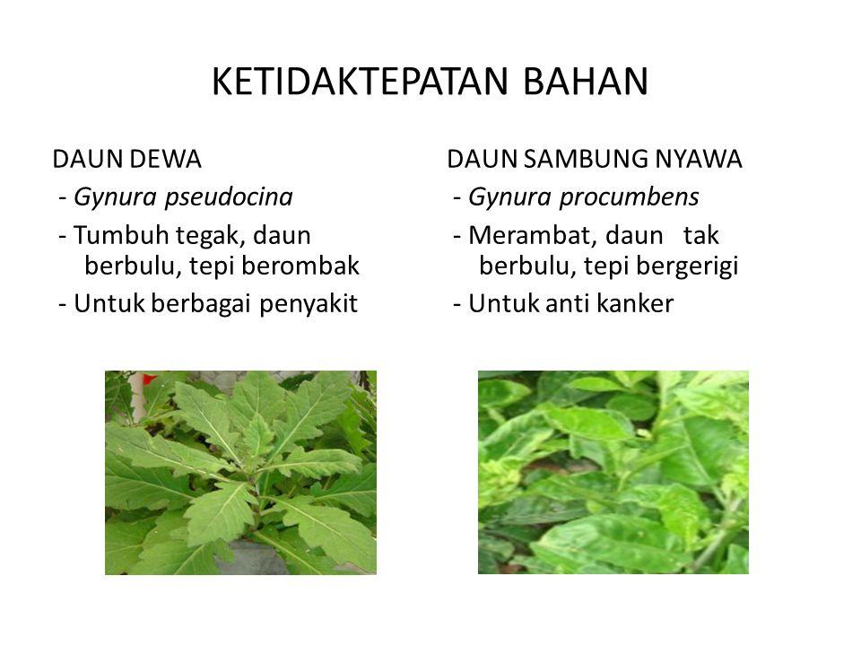 KETIDAKTEPATAN BAHAN DAUN DEWA - Gynura pseudocina - Tumbuh tegak, daun berbulu, tepi berombak - Untuk berbagai penyakit DAUN SAMBUNG NYAWA - Gynura p