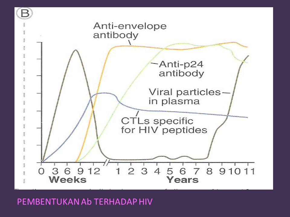 PEMBENTUKAN Ab TERHADAP HIV