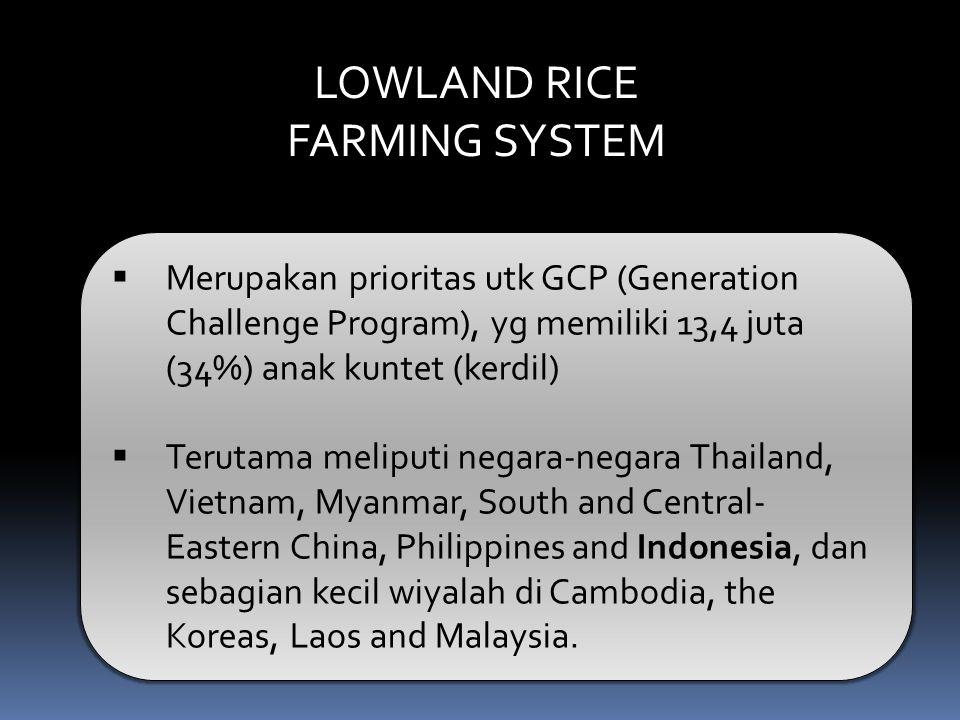 LOWLAND RICE FARMING SYSTEM  Merupakan prioritas utk GCP (Generation Challenge Program), yg memiliki 13,4 juta (34%) anak kuntet (kerdil)  Terutama