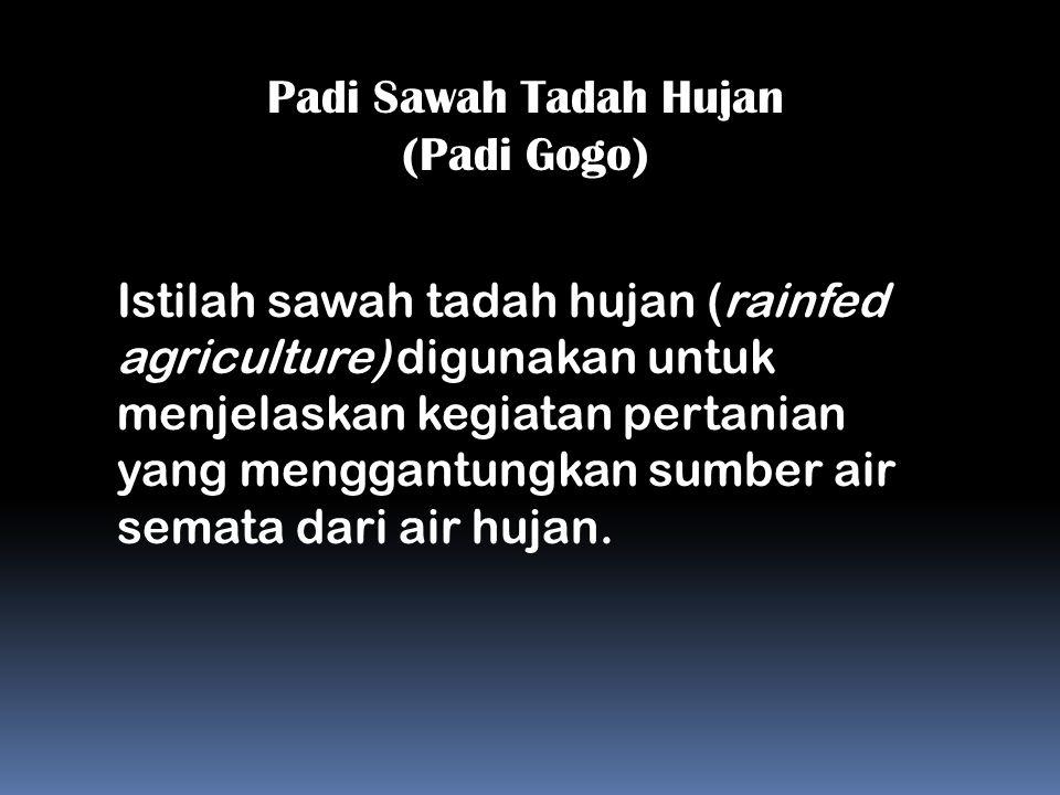 Padi Sawah Tadah Hujan (Padi Gogo) Istilah sawah tadah hujan (rainfed agriculture) digunakan untuk menjelaskan kegiatan pertanian yang menggantungkan