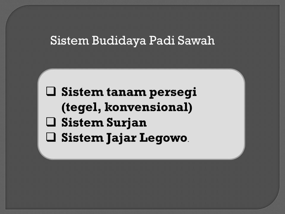 Sistem Budidaya Padi Sawah  Sistem tanam persegi (tegel, konvensional)  Sistem Surjan  Sistem Jajar Legowo.