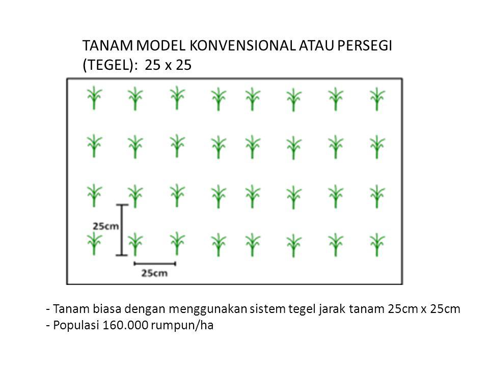 TANAM MODEL KONVENSIONAL ATAU PERSEGI (TEGEL): 25 x 25 - Tanam biasa dengan menggunakan sistem tegel jarak tanam 25cm x 25cm - Populasi 160.000 rumpun