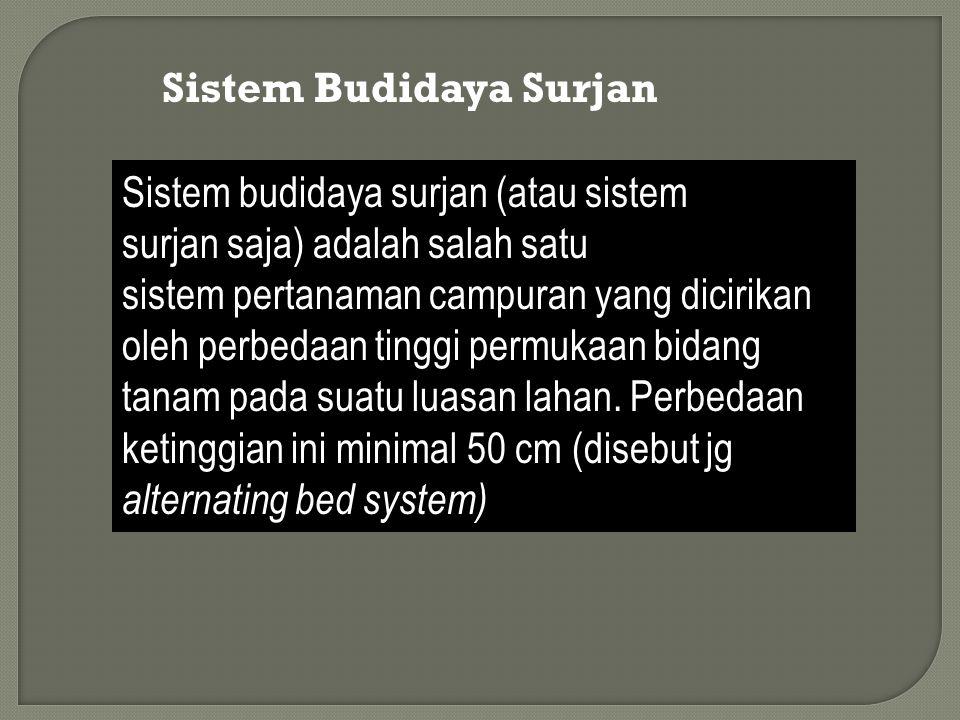 Sistem Budidaya Surjan Sistem budidaya surjan (atau sistem surjan saja) adalah salah satu sistem pertanaman campuran yang dicirikan oleh perbedaan tin