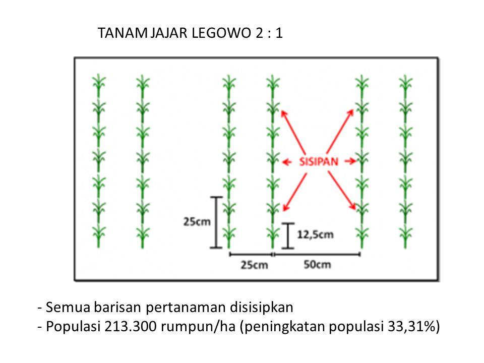 TANAM JAJAR LEGOWO 2 : 1 - Semua barisan pertanaman disisipkan - Populasi 213.300 rumpun/ha (peningkatan populasi 33,31%)