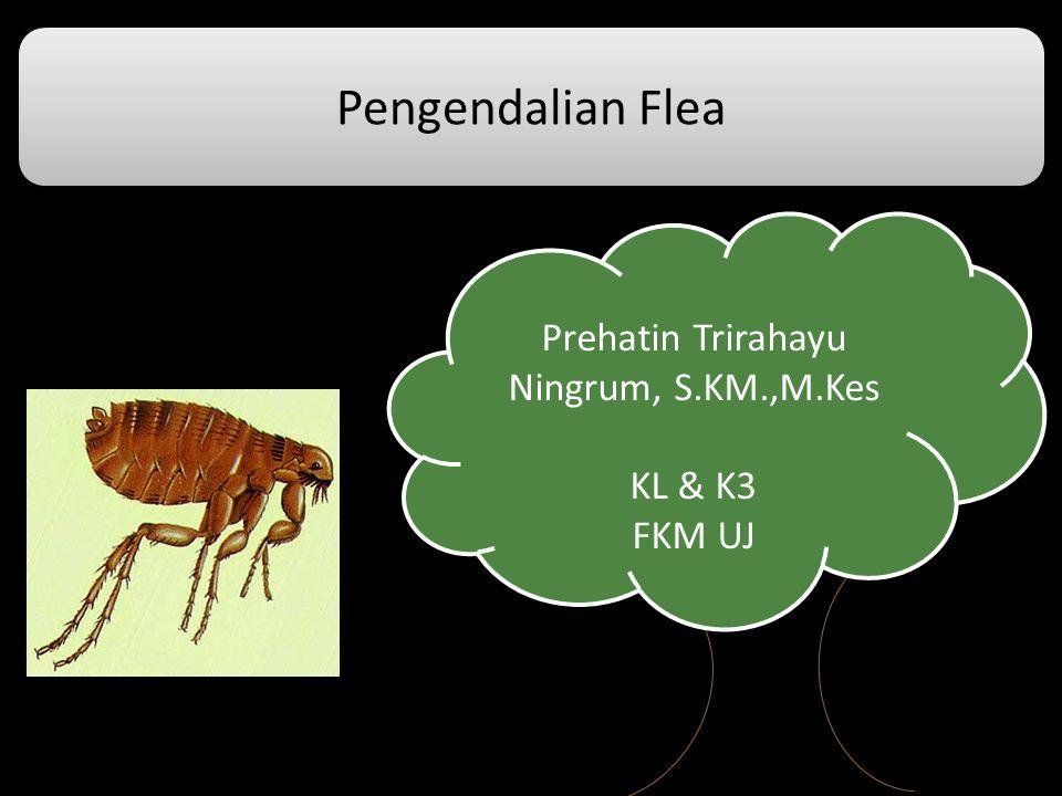 Pengendalian Flea Prehatin Trirahayu Ningrum, S.KM.,M.Kes KL & K3 FKM UJ Prehatin Trirahayu Ningrum, S.KM.,M.Kes KL & K3 FKM UJ