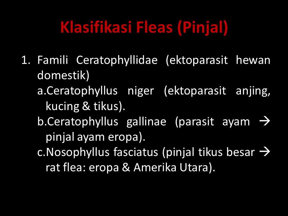 2.Famili Leptopsyllidae a.Leptopsylla segnis (pinjal tikus  mouse flea)  vektor penyakit pes pd manusia.