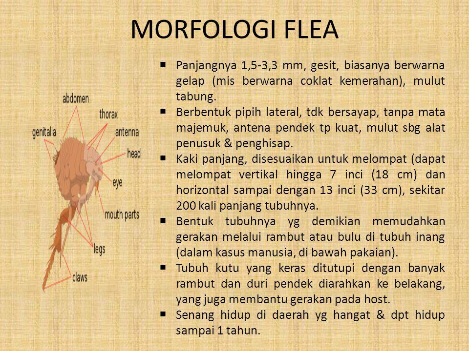 MORFOLOGI FLEA  Panjangnya 1,5-3,3 mm, gesit, biasanya berwarna gelap (mis berwarna coklat kemerahan), mulut tabung.