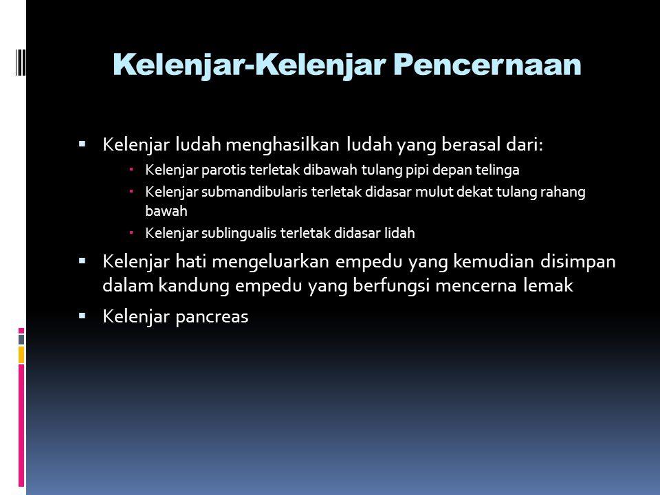 Fisiologis Rongga mulut  Dalam rongga mulut terdapat kelenjar ludah dan kelenjar bukal yang terletak pada lapisan mukosa  Kelenjar ludah terdiri dari 3 jenis kelenjar yaitu kelenjar parotis, sub mandibularis dan sublingual bersama dengan kelenjar bukal menghasilkan air ludah yang 95 % terdiri dari air dan sisanya mengandung lendir dan garam kalium dan natrium serta albumin, globulin, serum, ptyalin, amilase dan lisozym