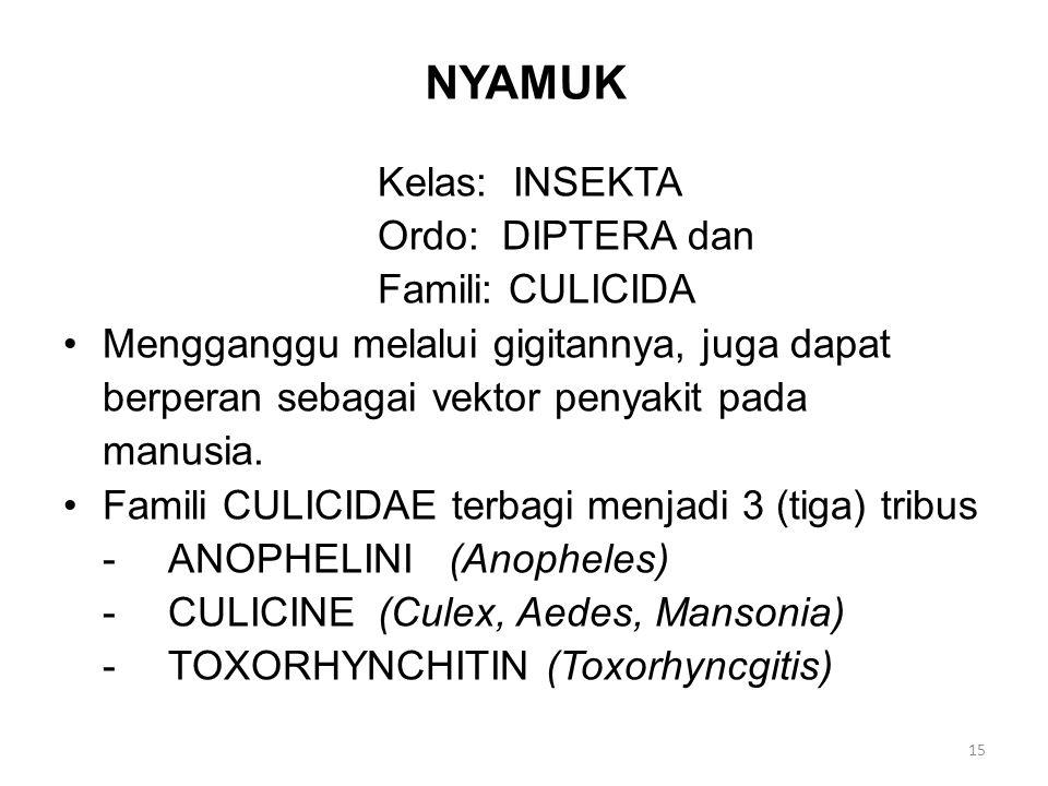 NYAMUK Kelas: INSEKTA Ordo: DIPTERA dan Famili: CULICIDA Mengganggu melalui gigitannya, juga dapat berperan sebagai vektor penyakit pada manusia.
