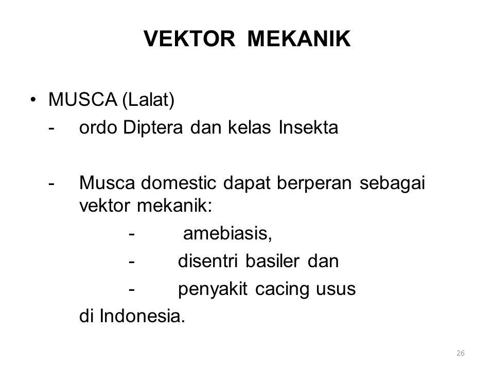 VEKTOR MEKANIK MUSCA (Lalat) -ordo Diptera dan kelas Insekta -Musca domestic dapat berperan sebagai vektor mekanik: - amebiasis, -disentri basiler dan -penyakit cacing usus di Indonesia.