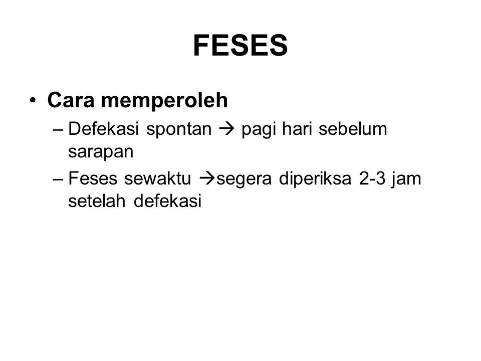FESES Cara memperoleh –Defekasi spontan  pagi hari sebelum sarapan –Feses sewaktu  segera diperiksa 2-3 jam setelah defekasi