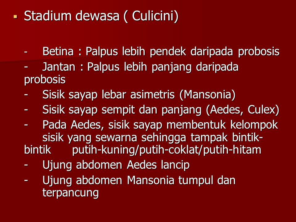  Stadium dewasa ( Culicini) - Betina : Palpus lebih pendek daripada probosis -Jantan : Palpus lebih panjang daripada probosis -Sisik sayap lebar asim