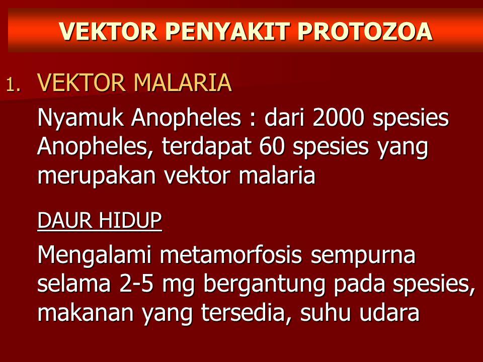 VEKTOR PENYAKIT PROTOZOA 1. VEKTOR MALARIA Nyamuk Anopheles : dari 2000 spesies Anopheles, terdapat 60 spesies yang merupakan vektor malaria DAUR HIDU