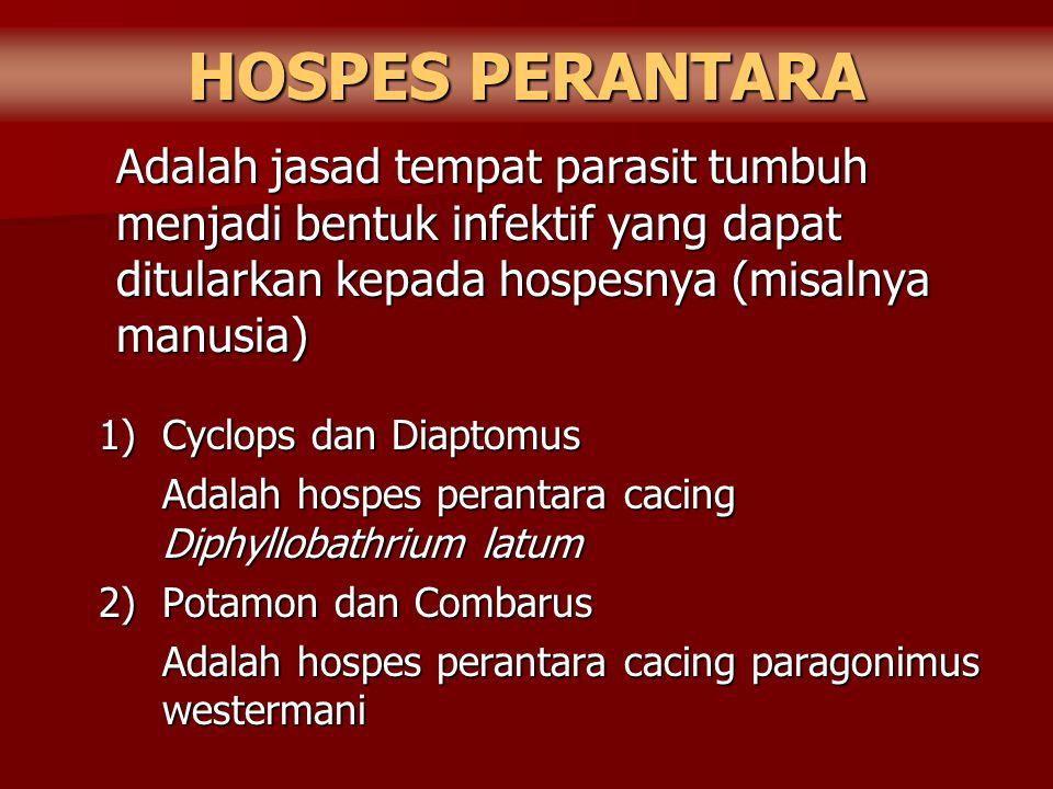 HOSPES PERANTARA Adalah jasad tempat parasit tumbuh menjadi bentuk infektif yang dapat ditularkan kepada hospesnya (misalnya manusia) 1)Cyclops dan Di