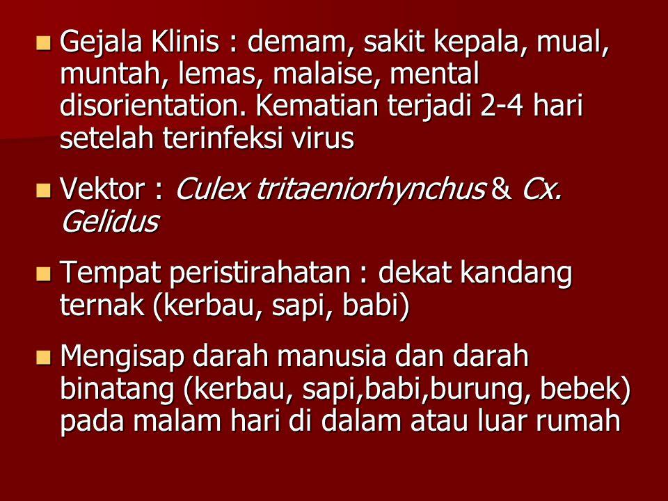 Gejala Klinis : demam, sakit kepala, mual, muntah, lemas, malaise, mental disorientation. Kematian terjadi 2-4 hari setelah terinfeksi virus Gejala Kl