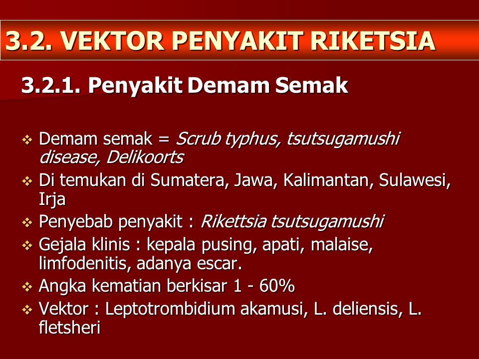3.2. VEKTOR PENYAKIT RIKETSIA 3.2.1. Penyakit Demam Semak  Demam semak = Scrub typhus, tsutsugamushi disease, Delikoorts  Di temukan di Sumatera, Ja