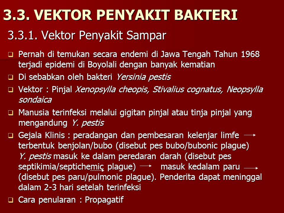 3.3. VEKTOR PENYAKIT BAKTERI 3.3.1. Vektor Penyakit Sampar  Pernah di temukan secara endemi di Jawa Tengah Tahun 1968 terjadi epidemi di Boyolali den