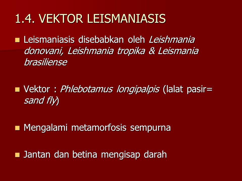 1.4. VEKTOR LEISMANIASIS Leismaniasis disebabkan oleh Leishmania donovani, Leishmania tropika & Leismania brasiliense Leismaniasis disebabkan oleh Lei