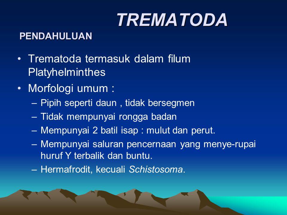 TREMATODA PENDAHULUAN TREMATODA PENDAHULUAN Trematoda termasuk dalam filum Platyhelminthes Morfologi umum : –Pipih seperti daun, tidak bersegmen –Tida