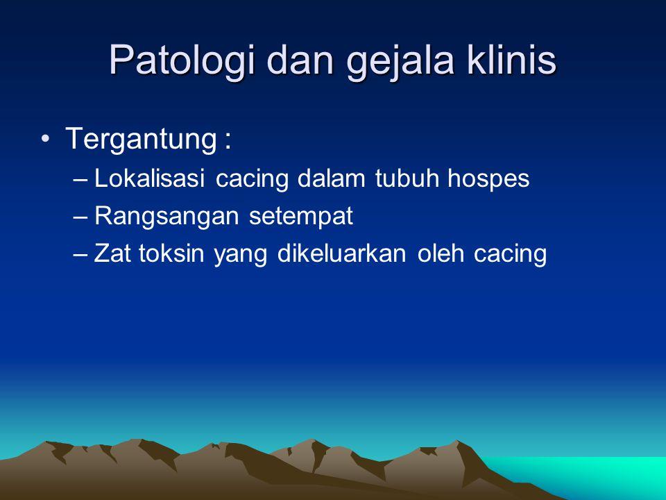 Patologi dan gejala klinis Tergantung : –Lokalisasi cacing dalam tubuh hospes –Rangsangan setempat –Zat toksin yang dikeluarkan oleh cacing