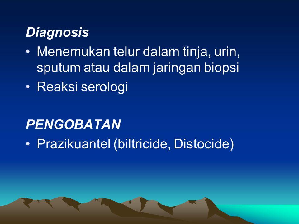 Diagnosis Menemukan telur dalam tinja, urin, sputum atau dalam jaringan biopsi Reaksi serologi PENGOBATAN Prazikuantel (biltricide, Distocide)