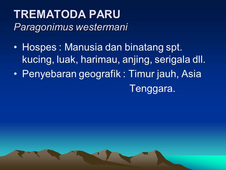 TREMATODA PARU Paragonimus westermani Hospes : Manusia dan binatang spt. kucing, luak, harimau, anjing, serigala dll. Penyebaran geografik : Timur jau