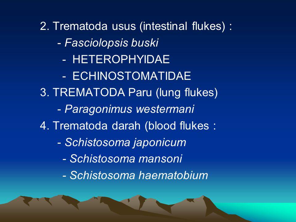 2.Trematoda usus (intestinal flukes) : - Fasciolopsis buski - HETEROPHYIDAE - ECHINOSTOMATIDAE 3.