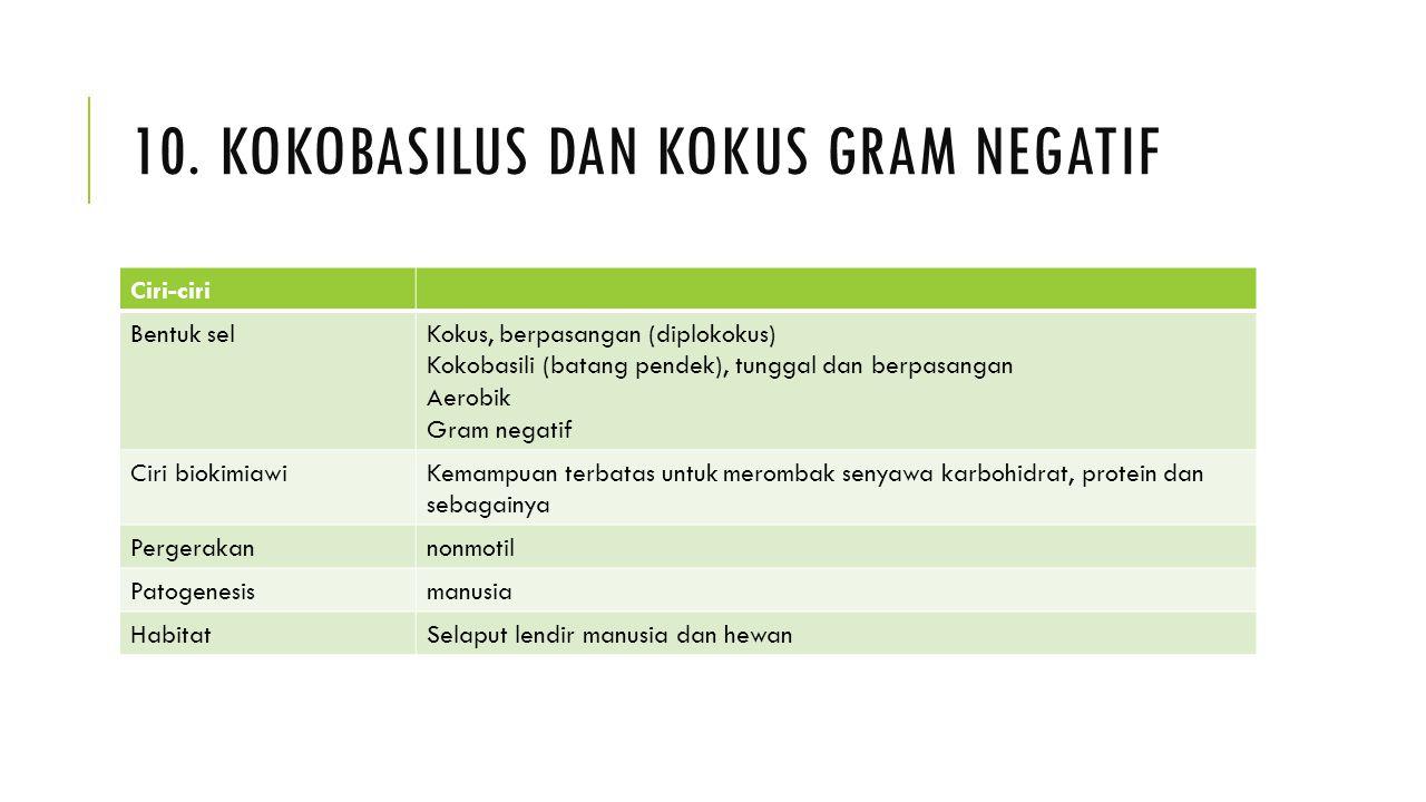 10. KOKOBASILUS DAN KOKUS GRAM NEGATIF Ciri-ciri Bentuk selKokus, berpasangan (diplokokus) Kokobasili (batang pendek), tunggal dan berpasangan Aerobik