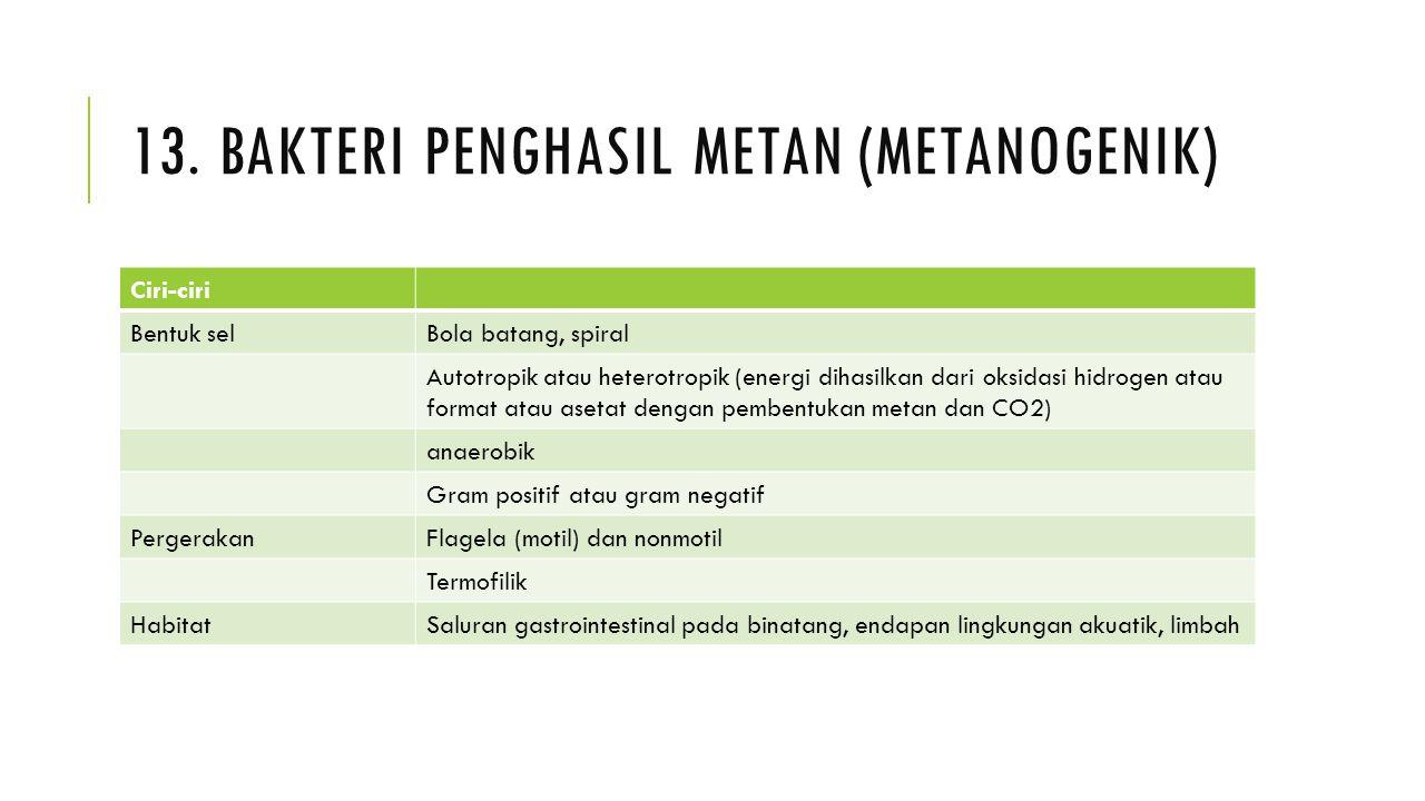 13. BAKTERI PENGHASIL METAN (METANOGENIK) Ciri-ciri Bentuk selBola batang, spiral Autotropik atau heterotropik (energi dihasilkan dari oksidasi hidrog