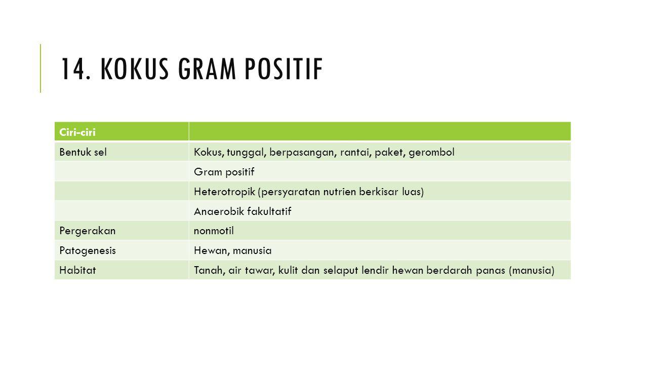 14. KOKUS GRAM POSITIF Ciri-ciri Bentuk selKokus, tunggal, berpasangan, rantai, paket, gerombol Gram positif Heterotropik (persyaratan nutrien berkisa