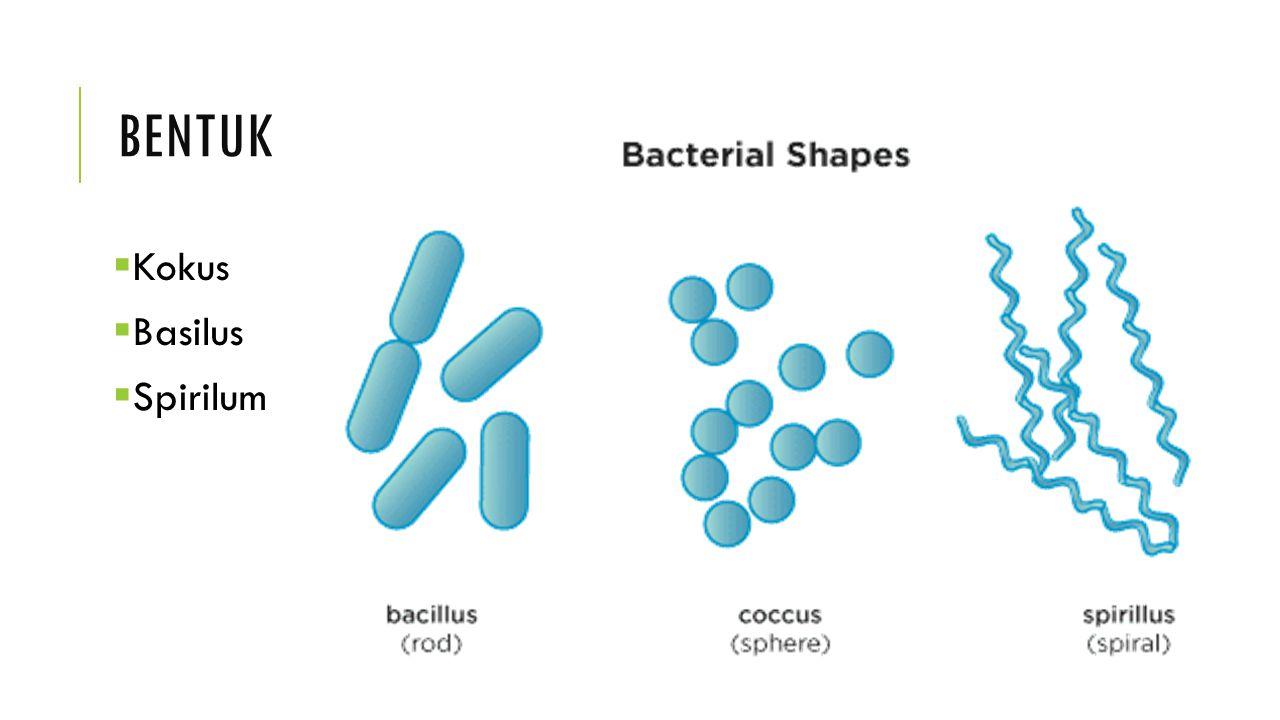 PENATAAN Setiap spesies bakteri memiliki pola penataan sel tertentu dan spesifik.